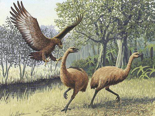 哈斯特巨鹰——史上最大的鹰