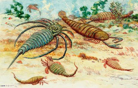 最早使用工具的动物:5亿年前海蝎用贝壳呼吸-生物