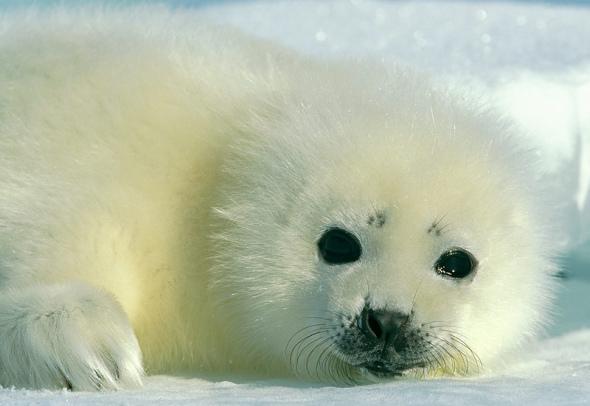 超可爱动物宝宝(图)-生物图库