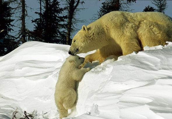 超可爱动物宝宝(图)