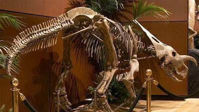 被公开拍卖的珍贵史前化石