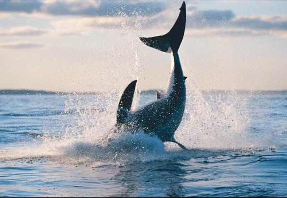 海底最大动物是什么