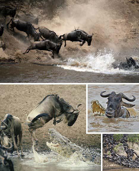 十大动物迁徙奇迹-学科中考网