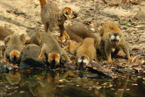 科学家解开马达加斯加动物来源之谜(图)