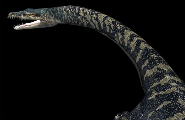 史前深海怪物:幻龙牙齿如针般尖利(组图)(下)-生物与