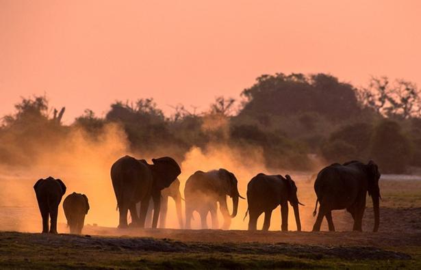 非洲野生动物壮丽剪影-文明之旅