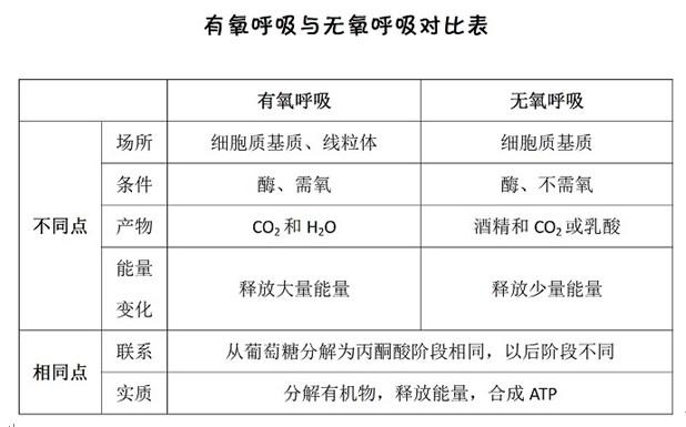 高中生物知识点:有氧呼吸和无氧呼吸