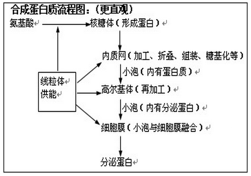2015高考生物第一轮复习:常考知识点(二)_学科网
