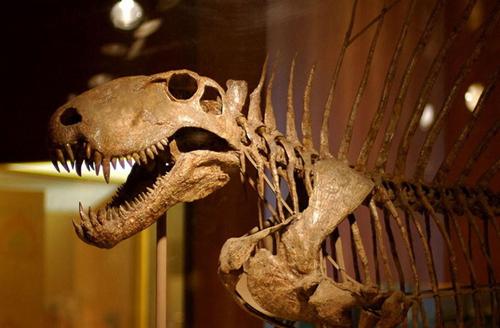 帆龙(帆背哺乳动物祖先)等哺乳动物曾是陆地霸主
