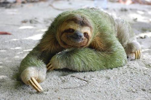 盘点自然界中罕见的色彩变异动物