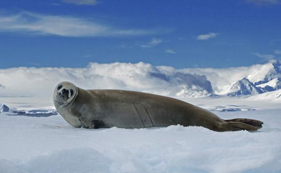 南极的动物们——冰雪世界里的正能量(图)