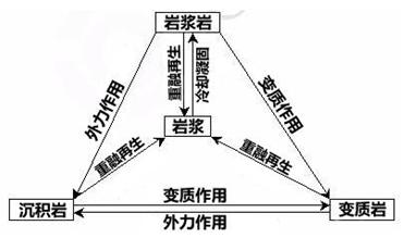 物质组成和物质循环
