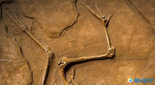 十大史前动物谜团:恐龙不是冷血动物