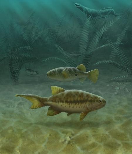 鱼类尾部和四足动物的尾部实际上是完全不同的结构