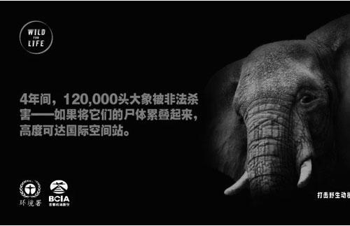 联合国环境规划署聚焦野生动物保护-学科中考