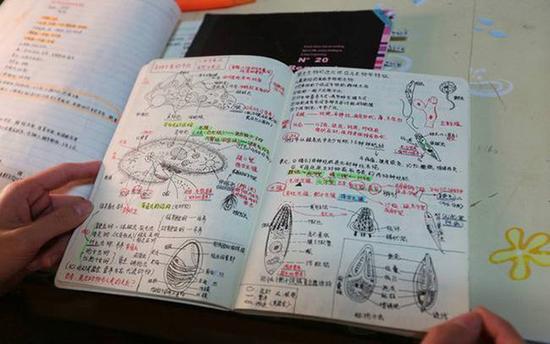 植物笔记记录绘画