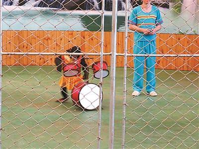 广州动物园回应马戏团拒绝关停:将联系工商部门